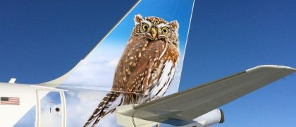 silent-flights-how-owls-could-help-make-wind-turbines-planes-quieter